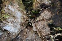 Fotokaart hout 11